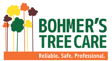 We are a small and innovative business that provides clients with modern arboricultural services, call us for all your tree care needs 0432 789 530 . http://www.bohmerstreecare.com.au/