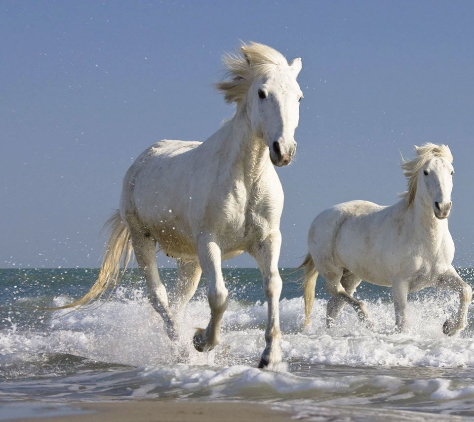 7 Running Horses Wallpaper Hd 48 Image Collections Of