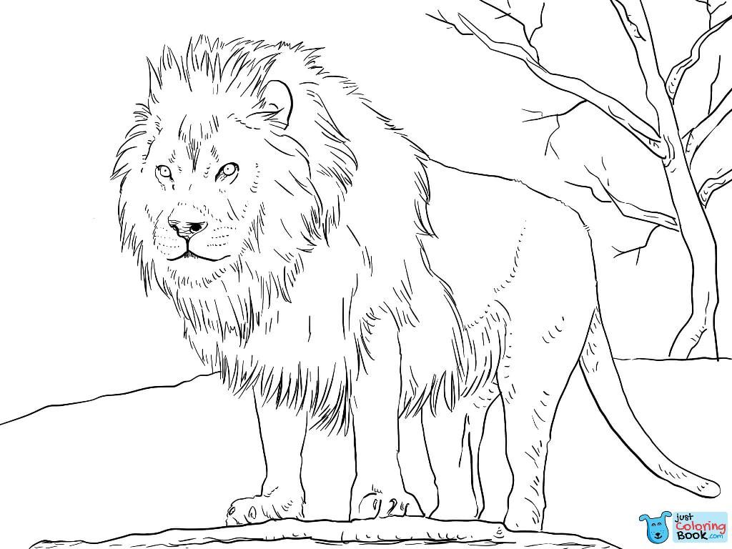 Male African Lion Coloring Page Free Printable Coloring Pages Inside Male Lion Coloring Pages Africanlion Printablecoloringpages Coloringp Super Kahramanlar