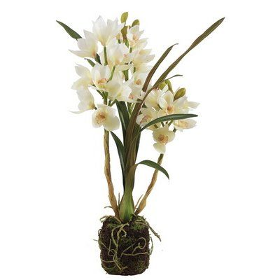 Bay Isle Home Cymbidium Drop Orchid Floral Arrangement In Plant Plants Floral Arrangements Orchids