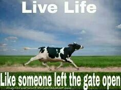 Reminds Me Of My Old Farm Cows Funny Farm Life Quotes Farm Humor