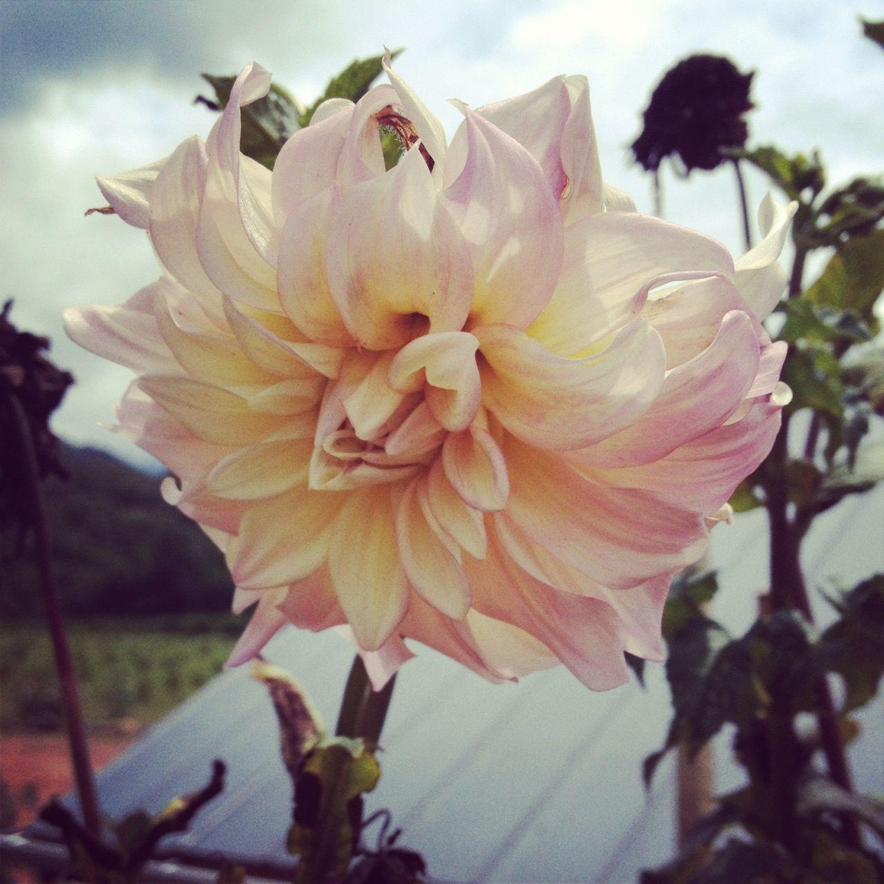 Summer  flowers north Carolina. Taken by me. (: