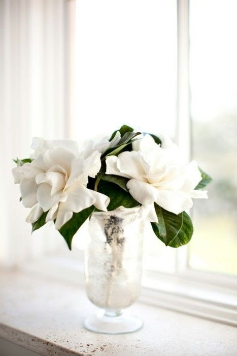 Gardenias Have Always Been The Favourite Picture By Ashley Mccormick Amazing Flowers White Flowers Flowers