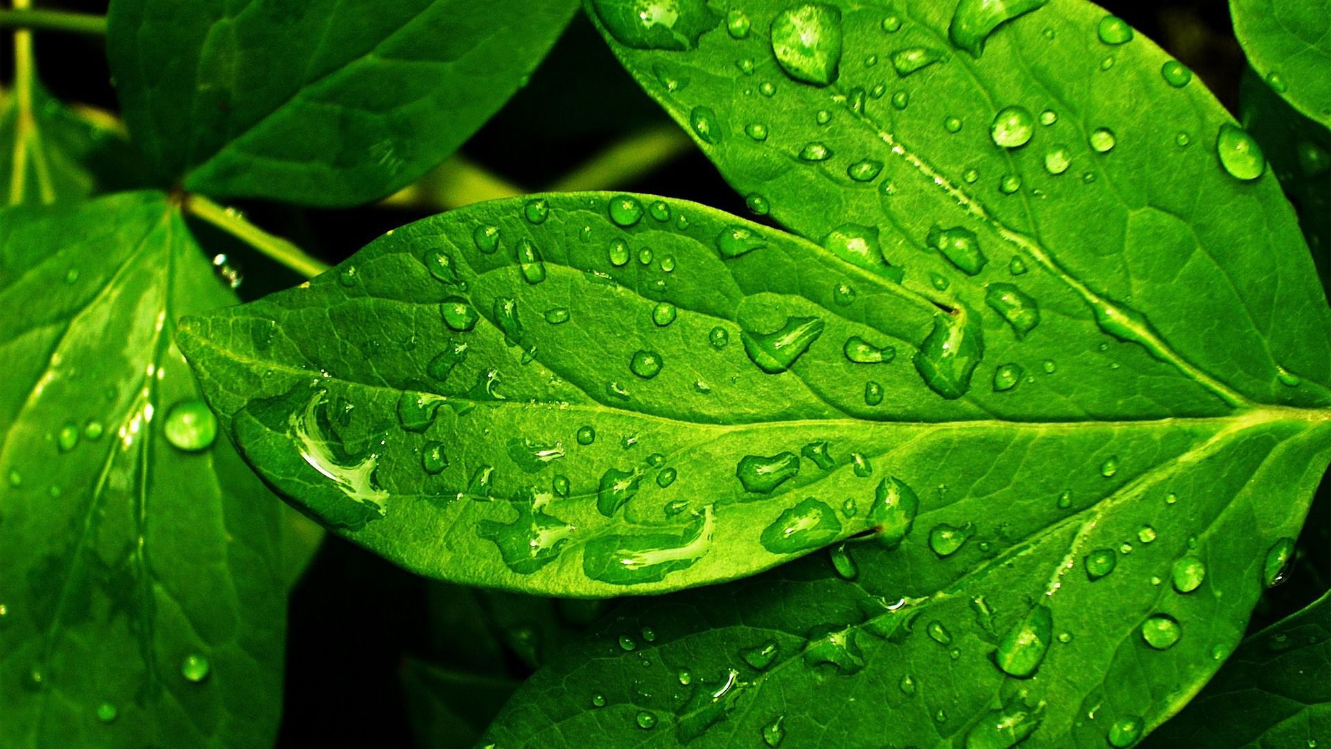 Green Leaf Nature Fresh Wallpaper Hd Desktop Free 432673829 Seni