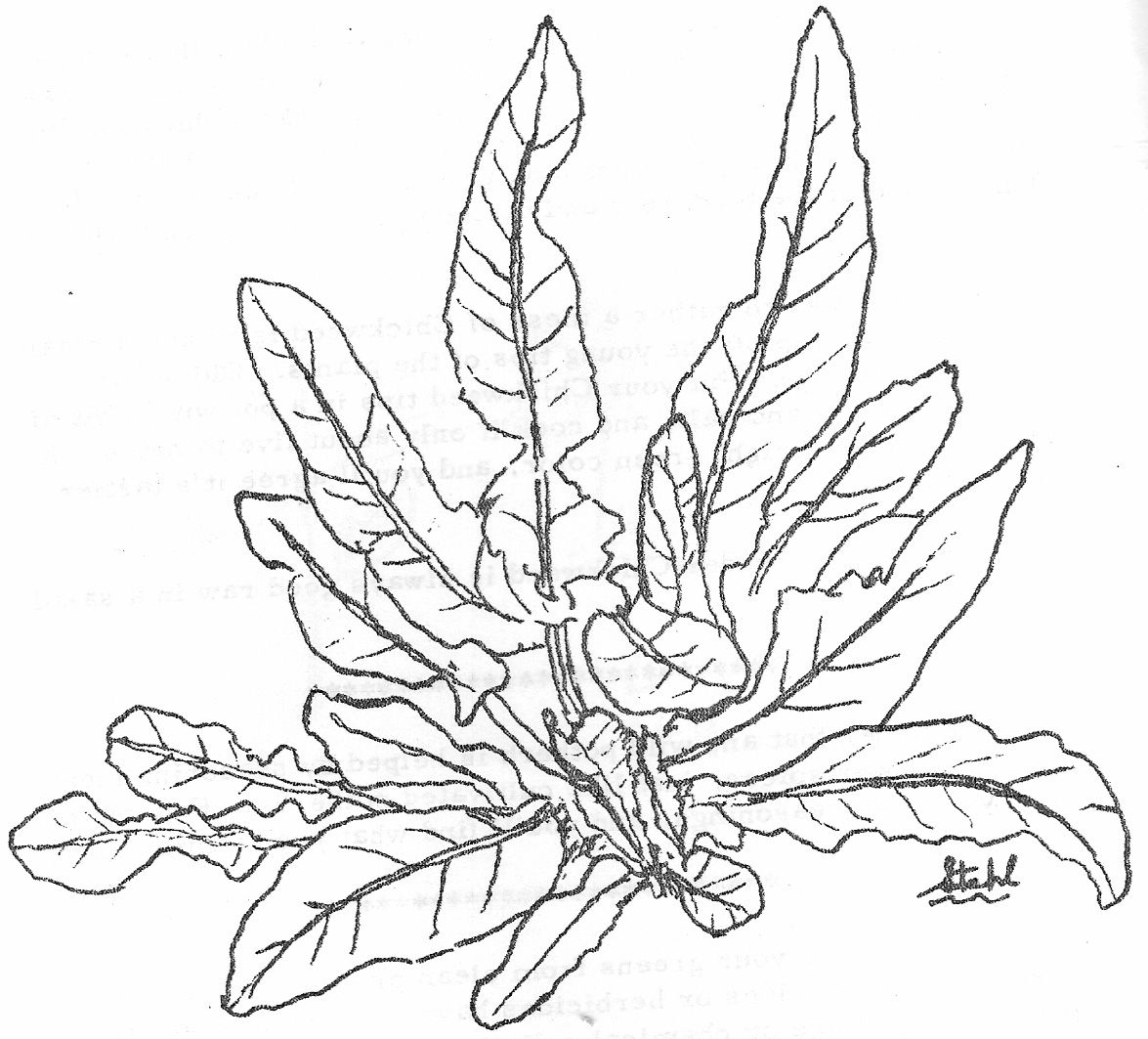 Uncategorized Coloring Pages Of Plants coloring pages of plants google search flowers2 pinterest search