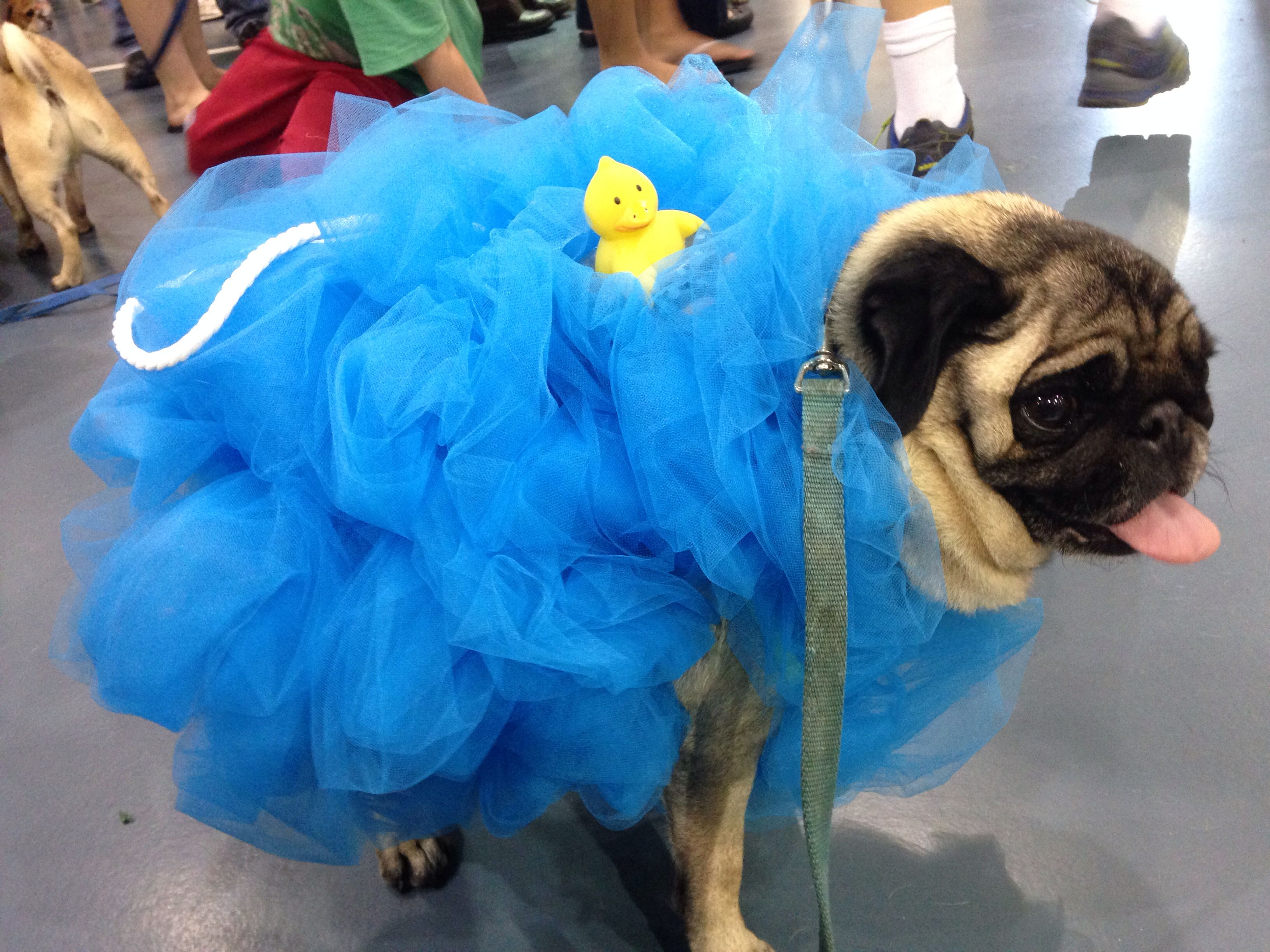 how to dress your dog like a latte for halloween - Bar Of Soap Halloween Costume