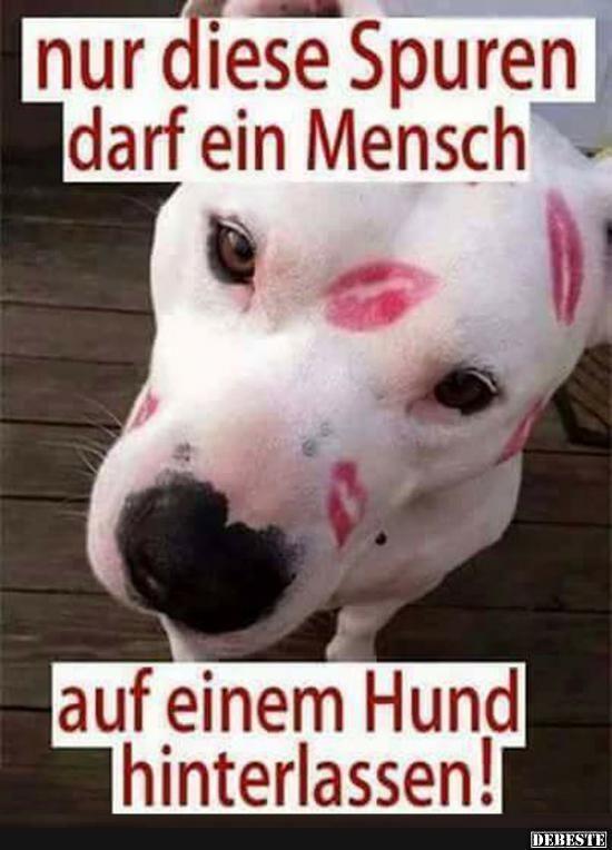 Besten Bilder Videos Und Spruche Und Es Kommen Taglich Neue Lustige Facebook Bilder Auf Debeste De Hier Werden Taglich Witze Tiere Lustige Bilder Tiere Hunde