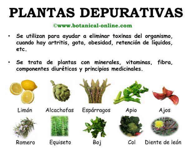 Plantas depurativas nutrici n pinterest las mejores for Mezclas de plantas medicinales