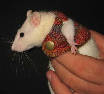 rats in sweaters | Tumblr | Cute animals, Cute cats and dogs