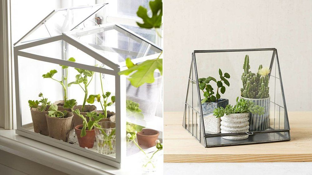 mini serre ikea google zoeken jardin terrarium indoor plants et plants. Black Bedroom Furniture Sets. Home Design Ideas