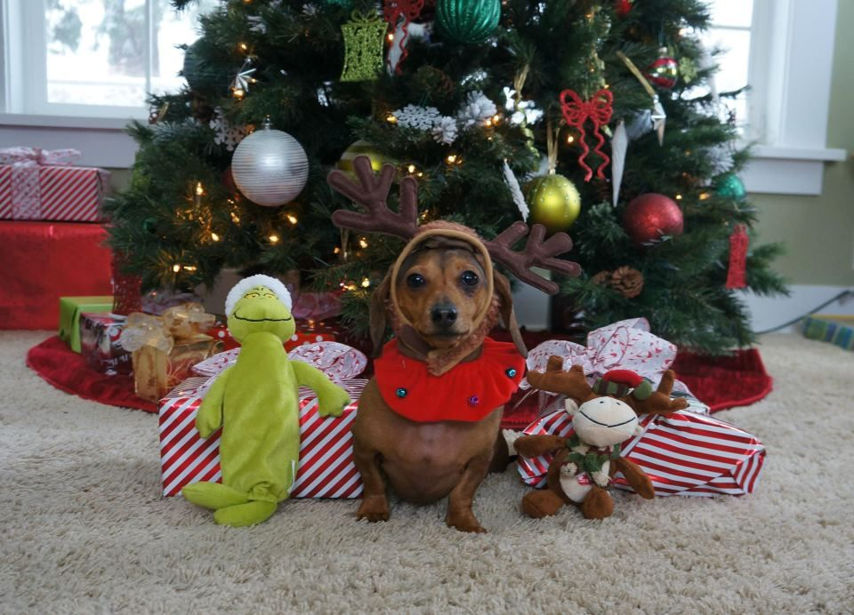 Noodle Richardson - great name! | Weenie Dogs | Pinterest