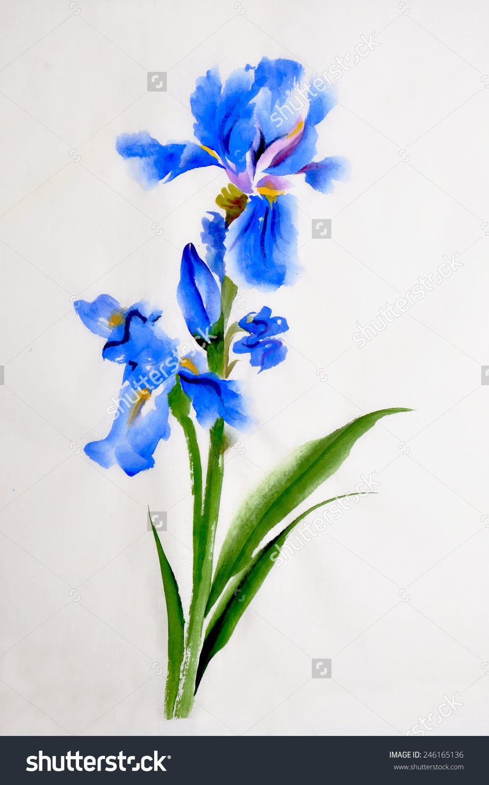 Stock Photo Blue Iris Flower Watercolor Painting On Rice Paper Chinese Style 246165136 Jpg 996 16 Watercolor Flowers Paintings Watercolor Flowers Iris Flowers