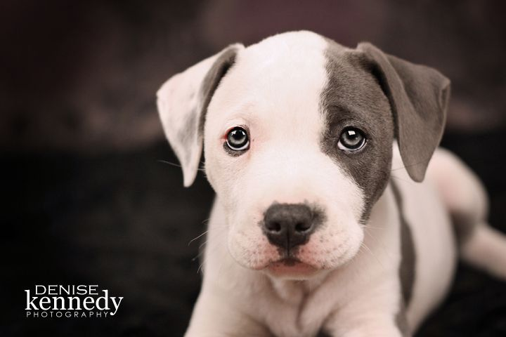 Barbie - our pit bull puppy