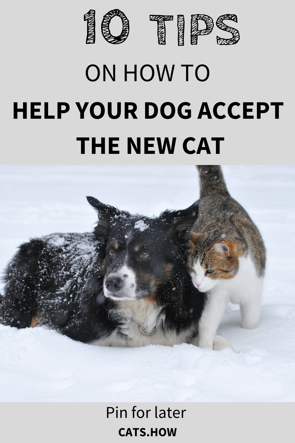 10 Tips On How To Help Your Dog Accept The New Cat In 2020 Introducing Kitten To Dog Dogs Kitten Care