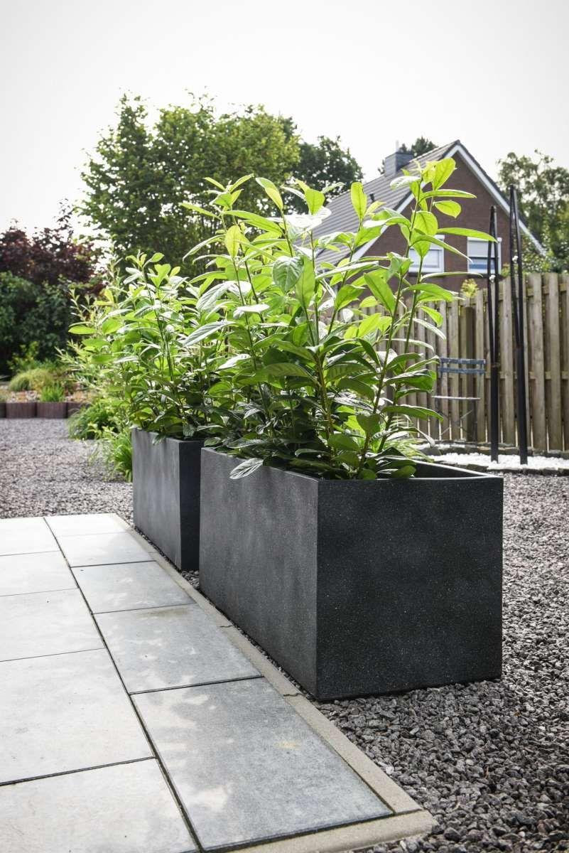 4er Set Pflanzkubel Raumteiler Beton Elemento Grau In 2020 Pflanzkubel Pflanztrog Beton Bepflanzung