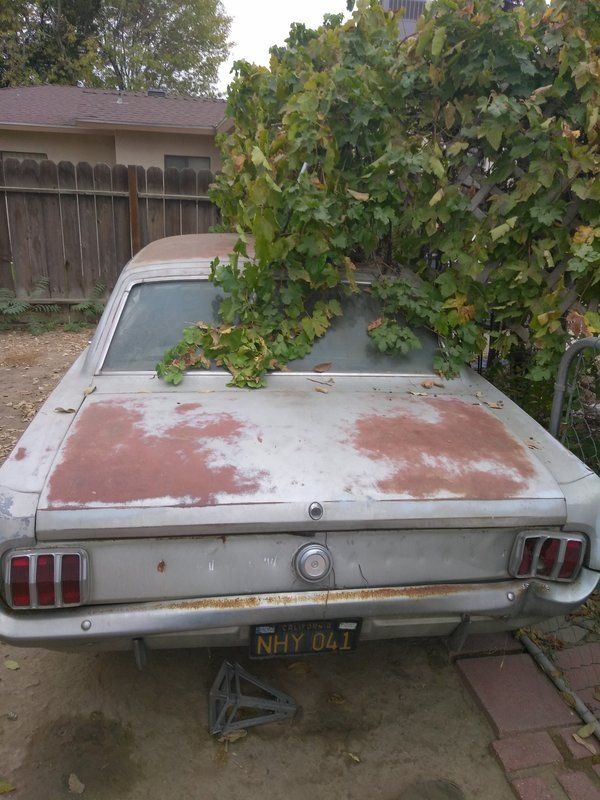 1964 Ford Mustang for sale by Owner - Bakersfield, CA ...