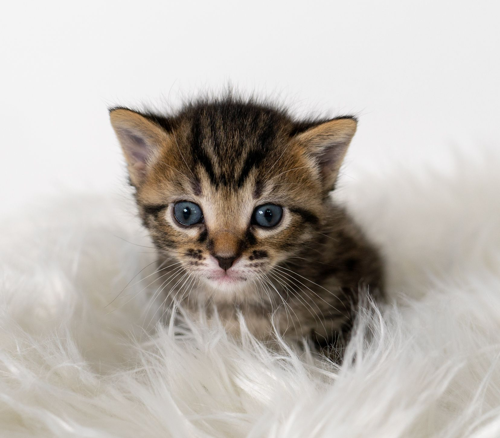 Fables tails photo updates kittens animals beautiful