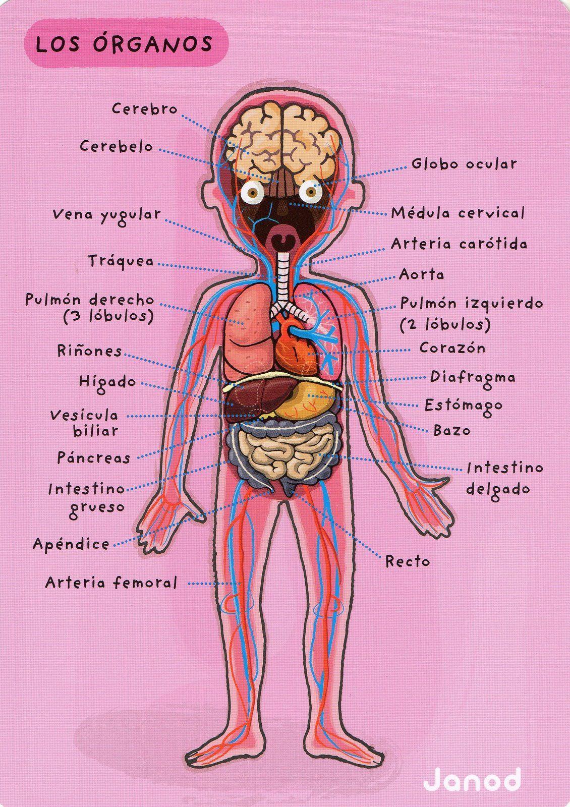 Album Archive | Spanish Class | Pinterest | Álbum, Medicina y Anatomía