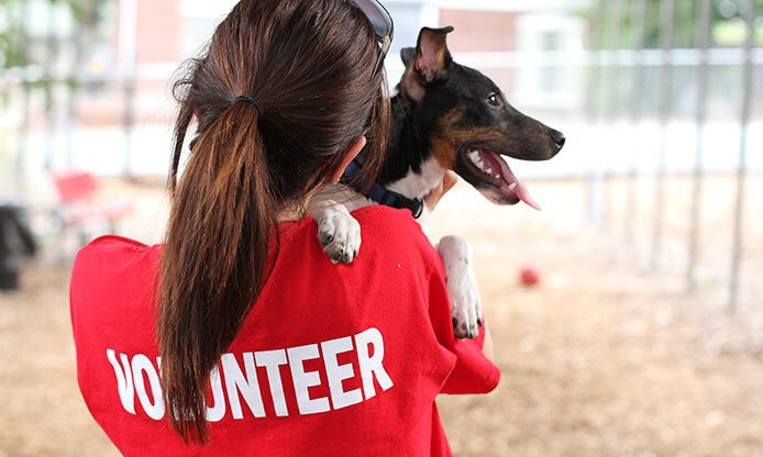 Volunteer Humane Society Places To Volunteer Animal Shelter Volunteer