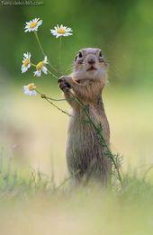 Unglaubliche Niedliche Tierbilder die Ihren Tag zeugen  Lustiges Tier