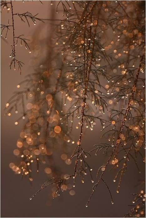 Lovely winter tree! outdoors Pinterest Winter, Photography and