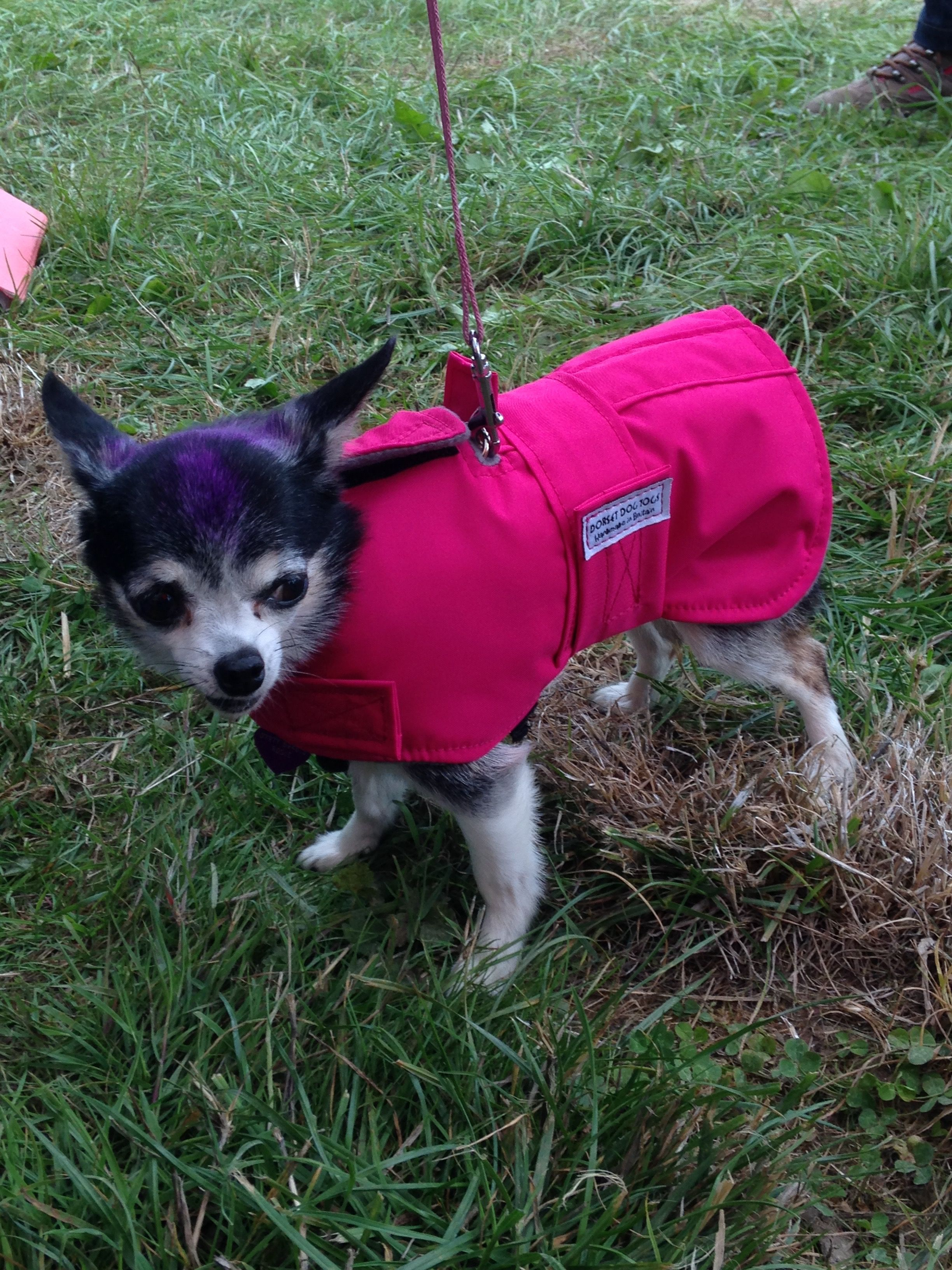 A dog coat thats easy to put on over a walking harness
