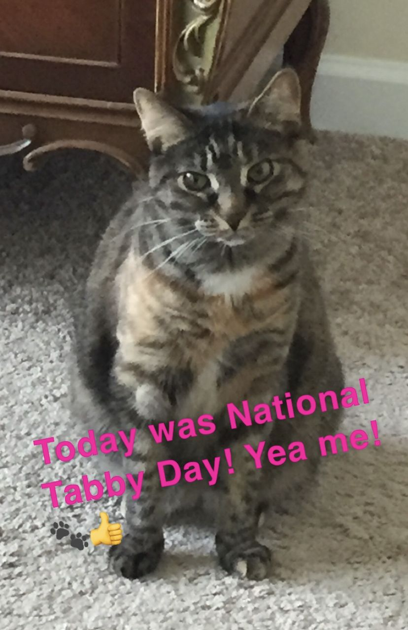 National Tabby Day! Hope you celebrated your Tabby today