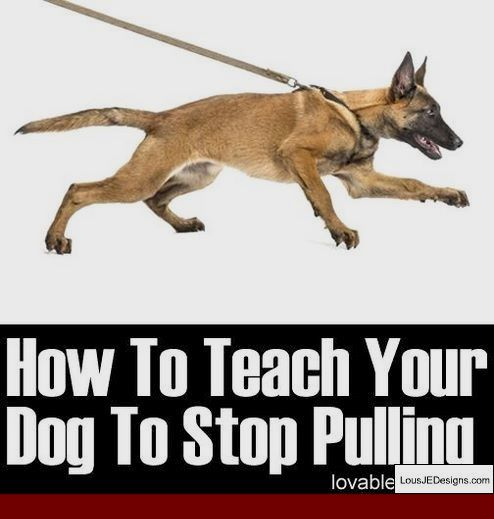 Wrong Ways To Train A Dog And Pics Of How To Train Your Dog To