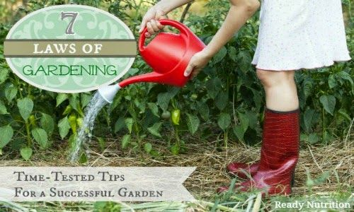 Natural Health News and Wellness Tips: 7 Laws of Gardening: Time-Tested Tips For Growing a Successful Garden