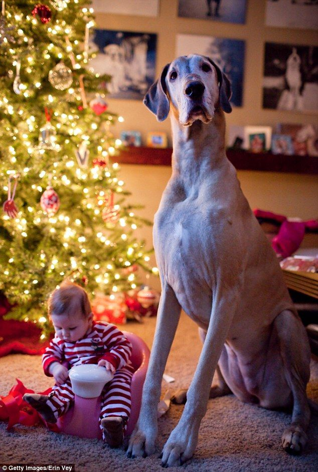 Adorable Photographs Of Big Dogs With Little Kids Big Dogs Dog Photos Dogs