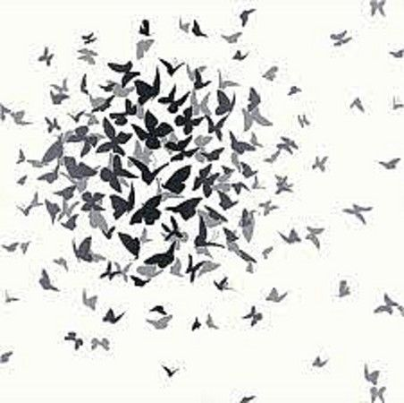 Arthouse Opera Butterfly Black White Butterflies Wallpaper 417601