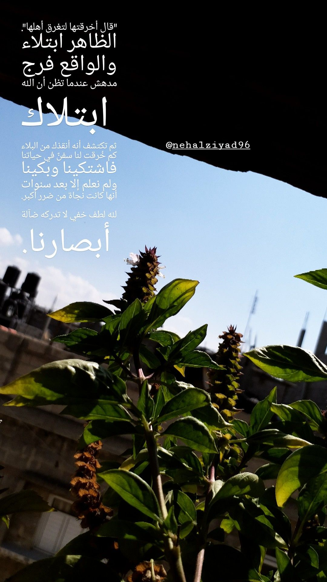 Sky Green Mypic Gaza C7pro English Quotes Just Save It Tea Drink Word Books Arabic Life Style Pics Sky Movie Posters
