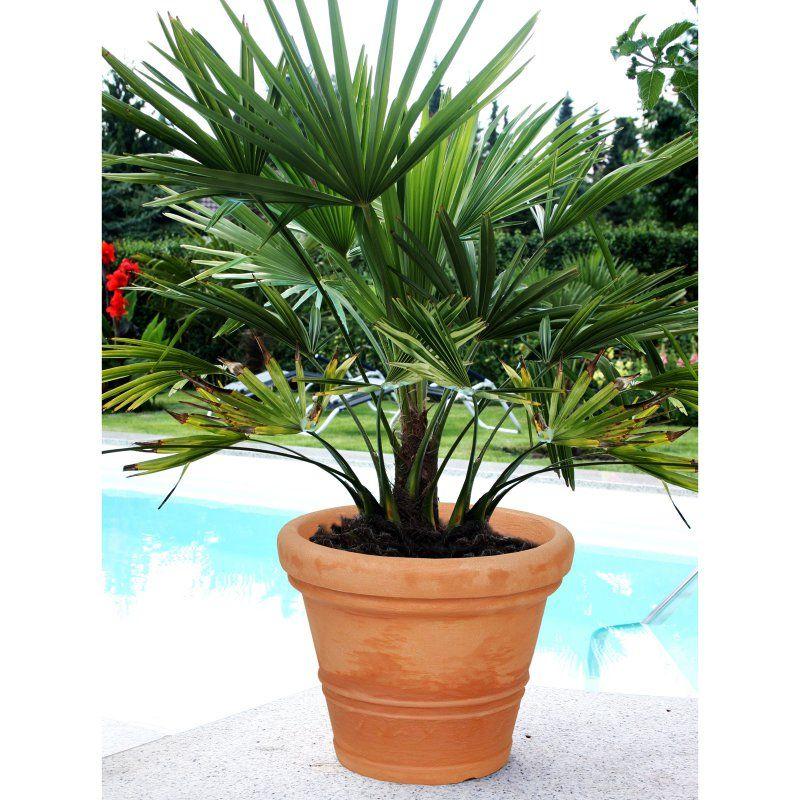 Claudia Round Resin Planter Anthracite Resin planters
