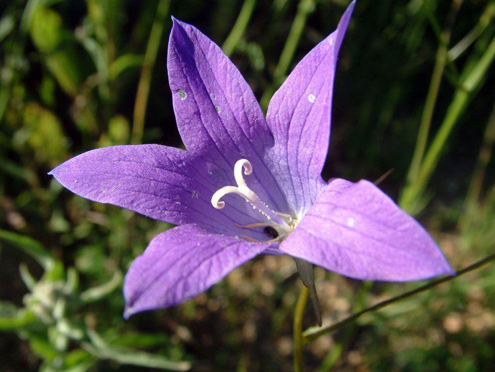 Pretty Flower 26 best flowers images on pinterest | pretty flowers, flower