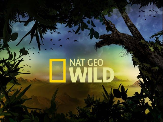 Assistir National Geographic Channel – Nat Geo – Online – 24 Horas – Ao Vivo