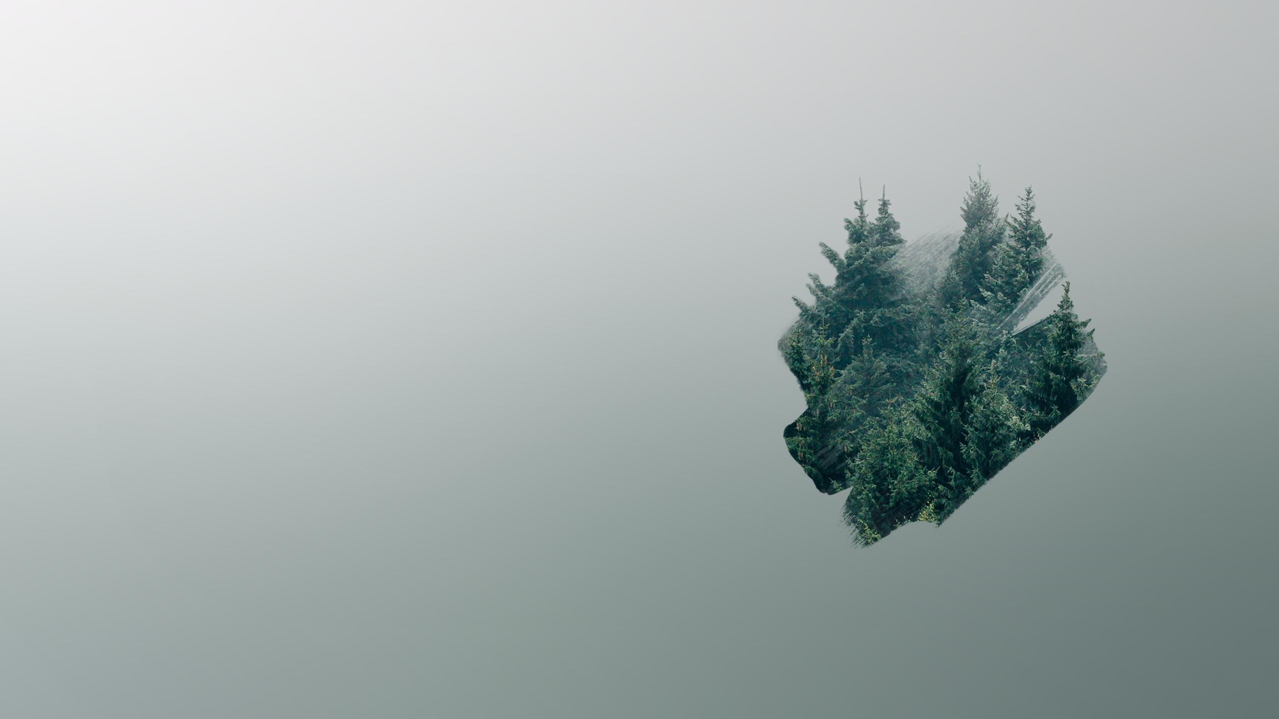 Minimalist Forest 2560x1440 Desktop Background Images Forest Hd Wallpaper