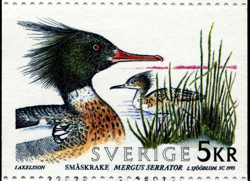 Schweden 1993 Birds Perched Birds Flying Birds Aground Stamp Community Forum Page 26 Postage Stamps World Birds Birds Flying