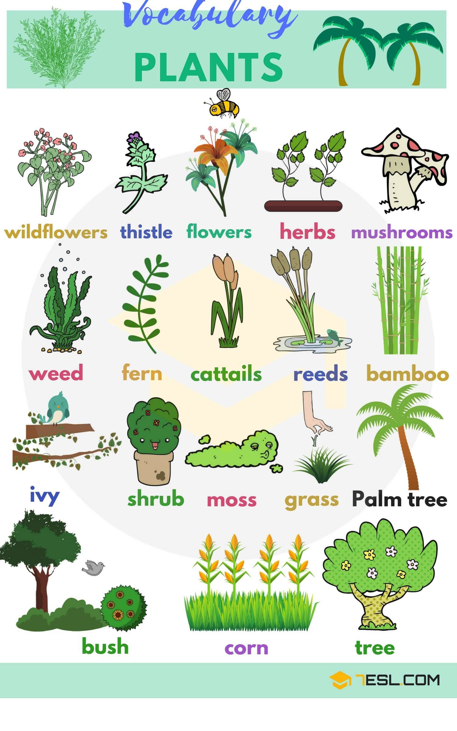 English Vocabulary for Plants Vocabulario en ingles