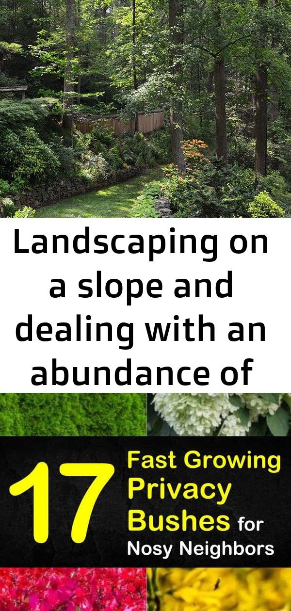 Landscaping on a slope and dealing with an abundance of shade in this garden levels 2 landscaping on a slope and dealing with an abundance of shade in this garden levels...