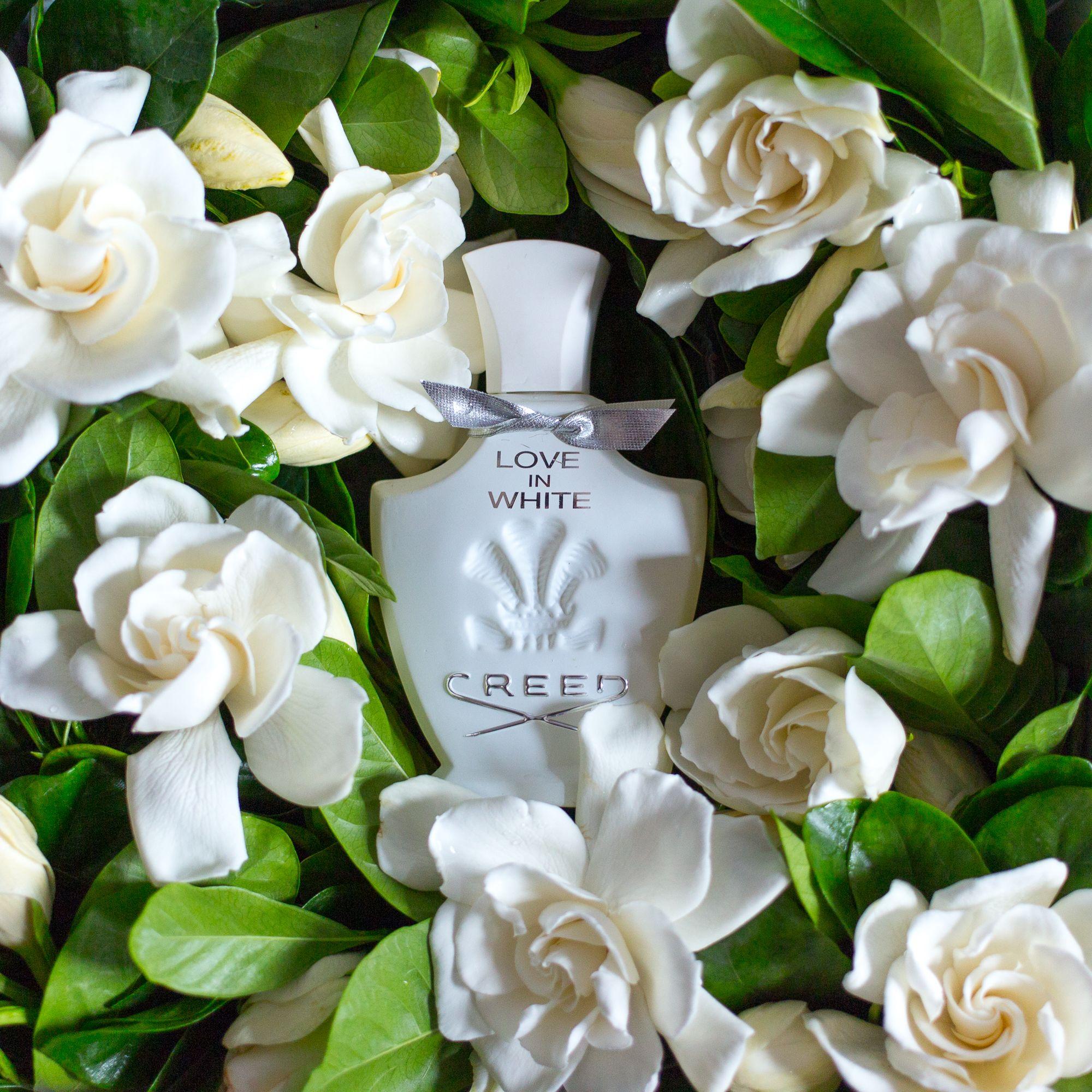 Gardenia Fragrance Gift Gardenia Perfumes Creed Gardenia