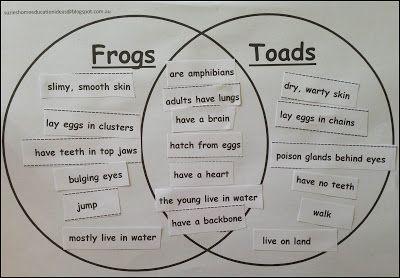 Frog And Toad Venn Diagram 2008 Chevrolet Cobalt Radio Wiring Amphibian Life Cycle Preschool Activities Science