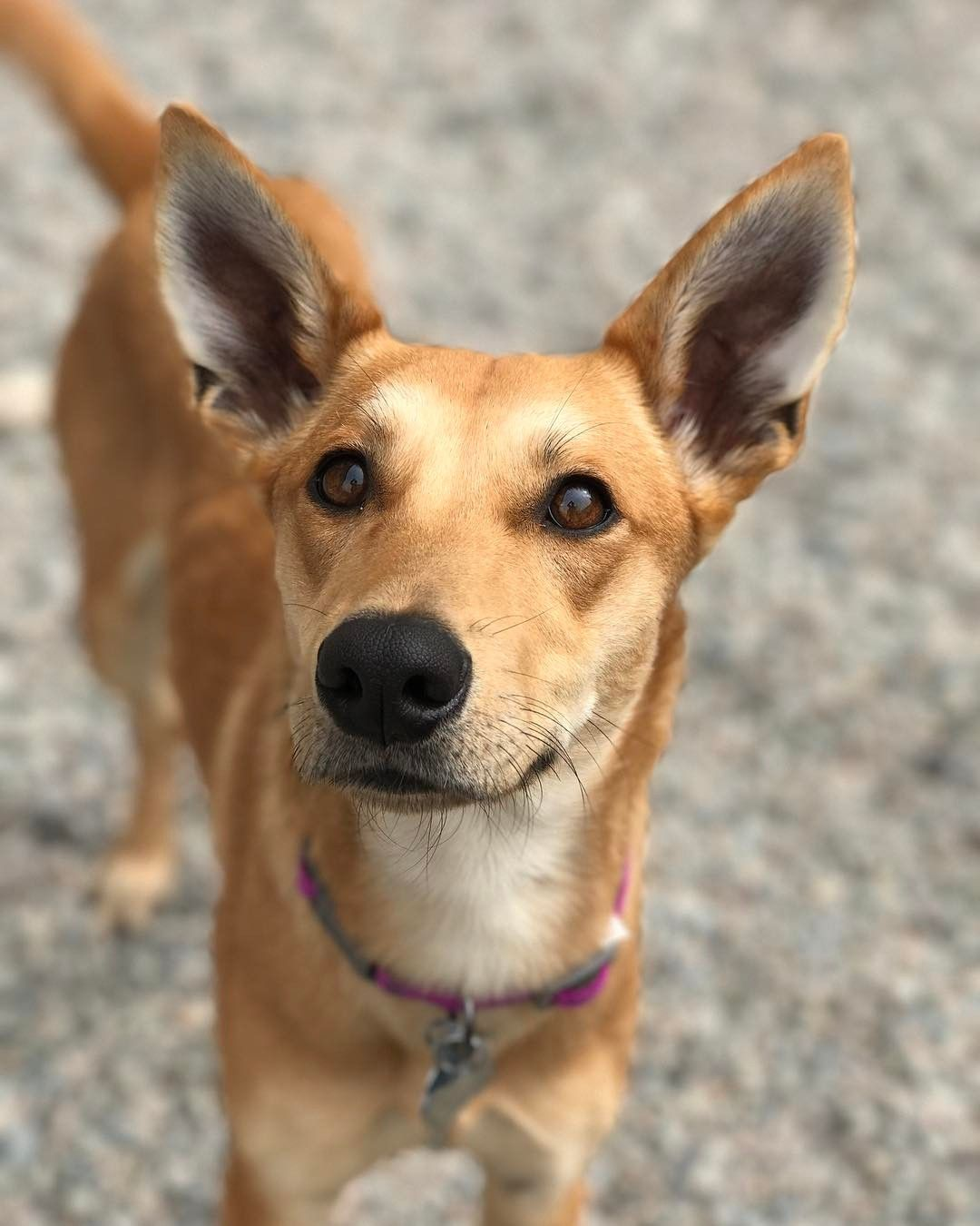 Foster 3! Up dog, Instagram, Instagram posts
