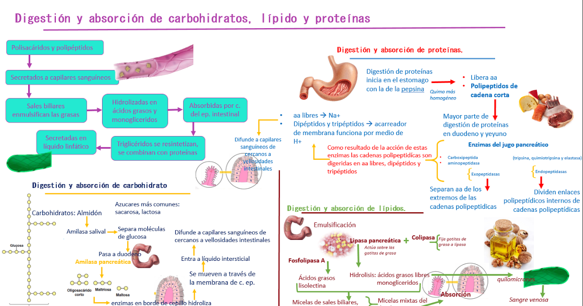 Qué Es El Metabolismo Basal Y Cómo Calcularlo