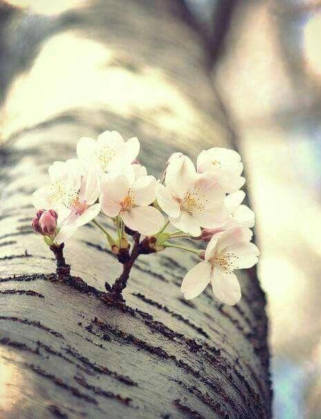 """""""La memoria guardará lo que valga la pena, la memoria sabe de mí, más que yo, y ella no pierde lo que merece ser salvado"""".  Eduardo Galeano"""