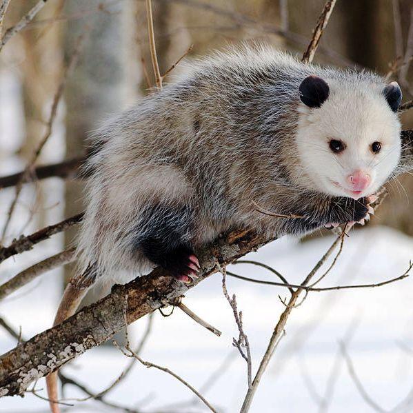 Pin On Exotic Animals Animals