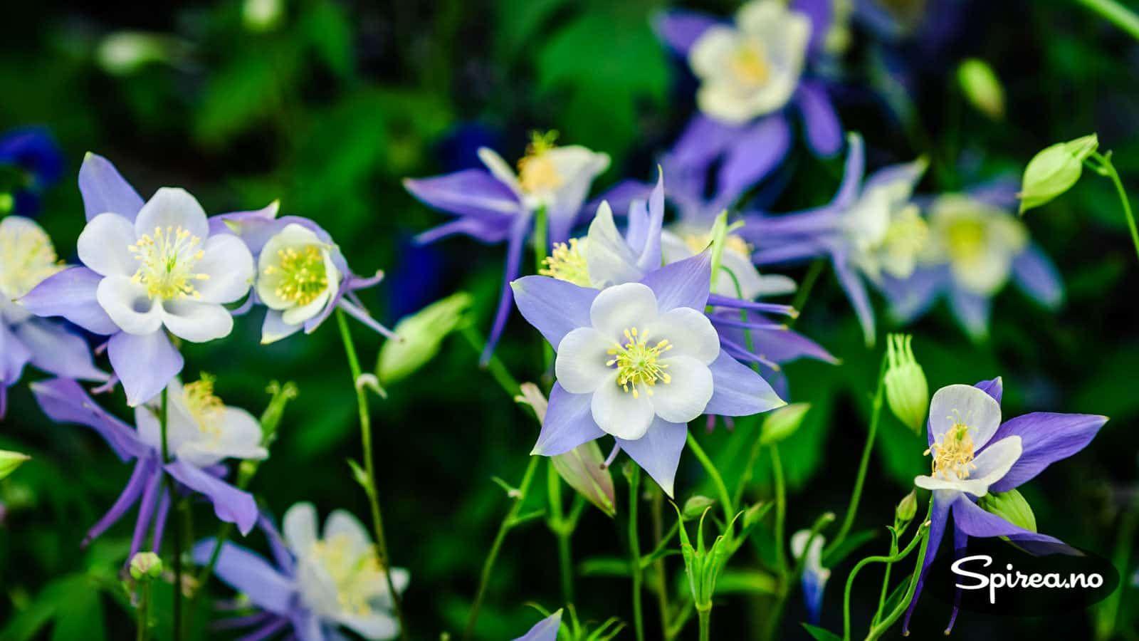 dating steder flora