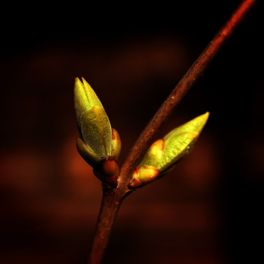 Golden bud by IndianSummer  on 500px
