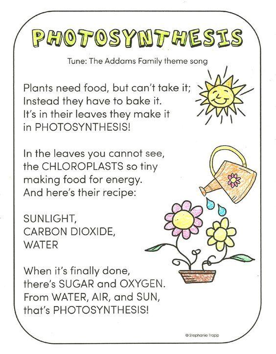 Photosynthesis Niwas Photosynthesis Photosynthesis Worksheet Photosynthesis Cellular Respiration