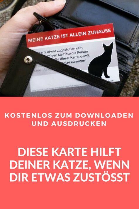 Photo of Imprima gratis: la tarjeta de emergencia para propietarios de gatos solteros