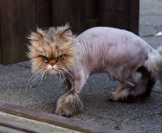 Hairless cat? Or Owner that should be stripped of all ...